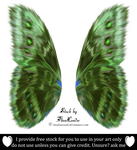Painted wings by TinaLouiseUk