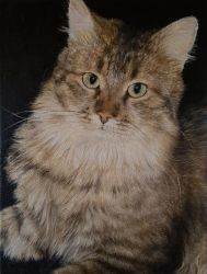Cat - Oil on Canvas by RandomMumble