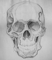 Skull drawing ref by RoderickFernandes