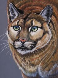 Turpentine Creek Mountain Lion  by HouseofChabrier