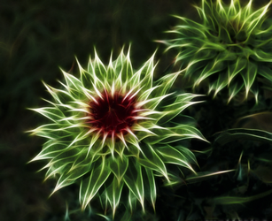 Thistle4 by mahesh69a
