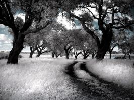 Infrared by ornie