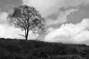 Tree (2) by masimage