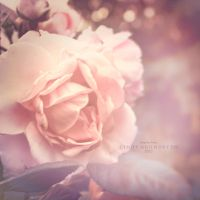 A rose for you by CindysArt
