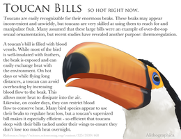 Science Fact Friday: Toucan Thermoregulation