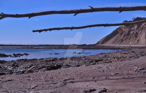Fallen Tree Beach by ChaosWolfPictures