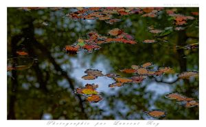 Autumnal reflection on the pond by laurentroy