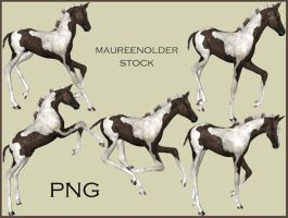 STOCK PNG Painted Foal by MaureenOlder
