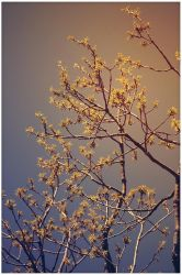 Spring Sky by ciseaux
