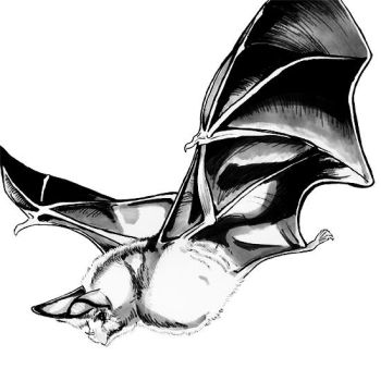 Flying Bat by racehell