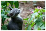 Smelling the Flower by jevigar