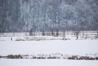 Winter Lake 12 by prints-of-stock