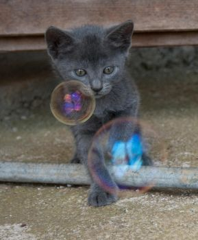Kitten and Bubble stock by Crysta-stock