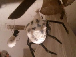 Handmade Spider Egg Sac (With Spiders) by BenorianHardback26