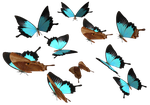 Peacock Royal Butterfly PNG by madetobeunique