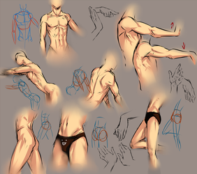 Anatomy practice sheet by moni158