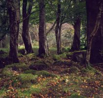 Lisnascreghog Wood by younghappy
