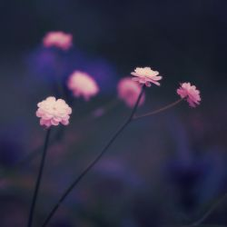 Softer by Ivoryia