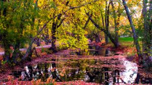Autumn Reflections by robmurdock