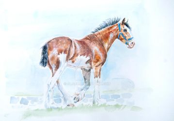 Clydesdale by Olga5
