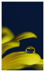 Yellow droplet II by Katosu