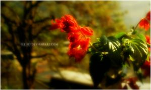 Flowers of Baguio 1 by fllint