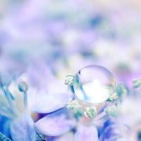 promises by illusionality