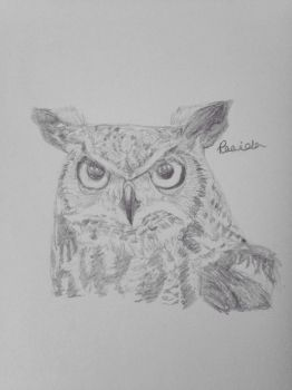 Owl Sketch  by Forestfire2
