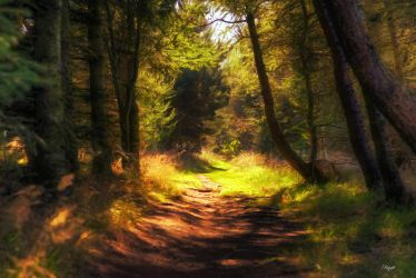 Light on the Path  by Trajan-pro
