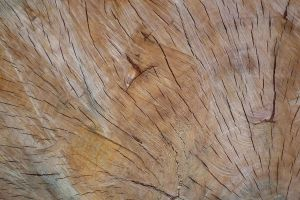 Wood Texture 14 by Limited-Vision-Stock