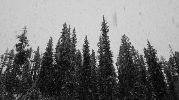 Yellowstone Snow Trees by DestrctiveEmily