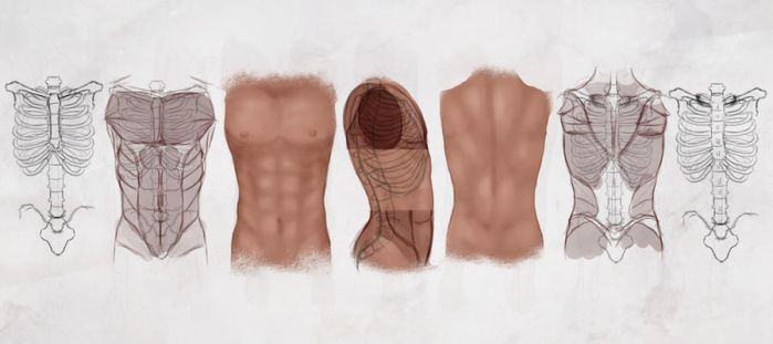 AS Drawing the Male Torso by CGCookie