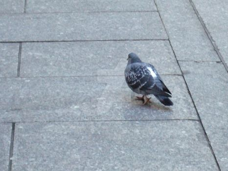 FATTEST FUCKING PIGEON EVA by myitachi