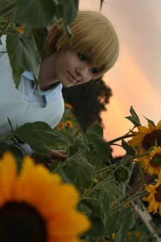 Kise: Sunflower in the Sunset by LordWolfram