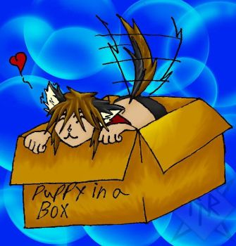 puppy in a box by kojith