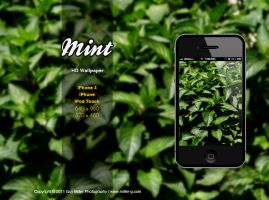 Mint - iPhone HD Wallpaper by guymiller