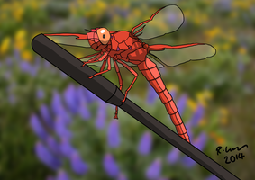 Dragonfly by Cathartis