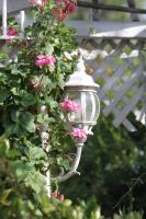 00294 - Lamp Surrounded by Flowers by emstock