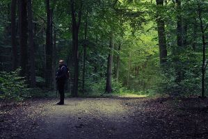 In the forest by ornie