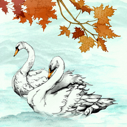 As study in Swans by AnkaS