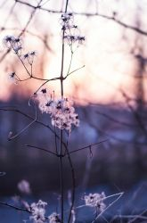 flower by siks