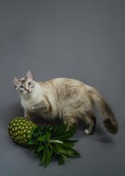 Pets and Produce - Eleanor + Pineapple by qinsleigh