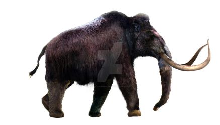 Woolly Mammoth - WIP part 2 by Dantheman9758