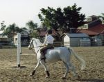 Horse Rider Stock by Limner-stock