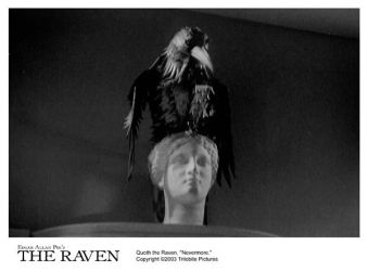 THE RAVEN 8x10-14 by trilobitepictures