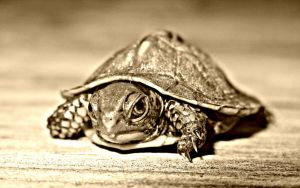 Baby Turtle by JNS0316