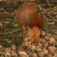 Squirrel's paradise by starykocur