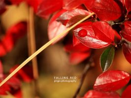 falling red by prigix