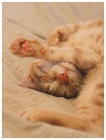 Artistic Sleeper - 13 weeks old Kitten by i-am-enrooted