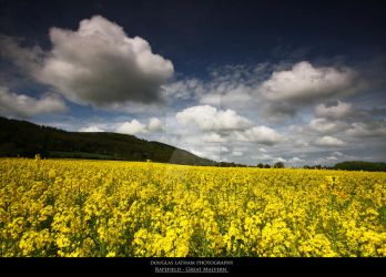 Rapefield - Great Malvern by DL-Photography